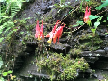 Wildflowers growing out of the stone at Watkins GlenState Park, New York