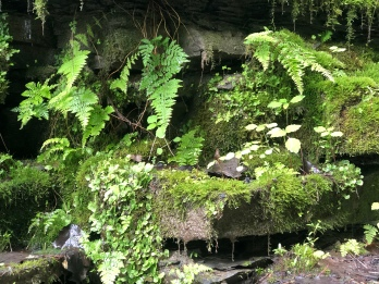 Ferns and Moss on the rock wall at Watkins Glen State Park, New York