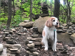 King Charles Cavalier at the Stone Markers on Rim Hiking Trail