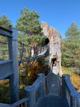 Bridges into the Snag and out on The Wild Walk, The Wild Center, Tupper Lake, New York