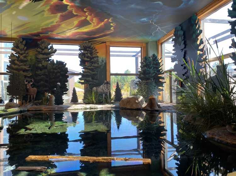 Indoor Pond Nature Study at The Wild Center, Tupper Lake, New York