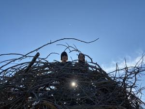 Giant Bird's Nest at The Wild Center