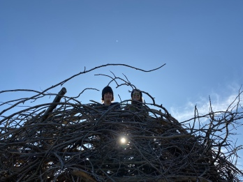 Giant Bird's Nest at The Wild Center
