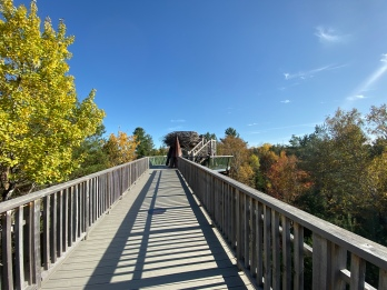 The Wild Walk, The Wild Center, Bird's Nest, Tupper Lake, New w