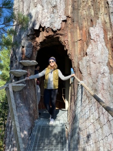 In the Snag on the WIld Walk, The Wild Center, Tupper Lake, New York—Tree Hollow