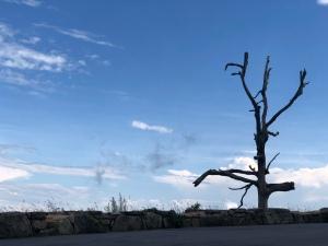 Tree at Little Devil's Stairs, Skyline Dr, Shenandoah National Park, VA